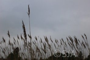 Long grass flowers